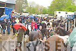 Horses and people mingle despite the rain at Milltown Fair on Sunday