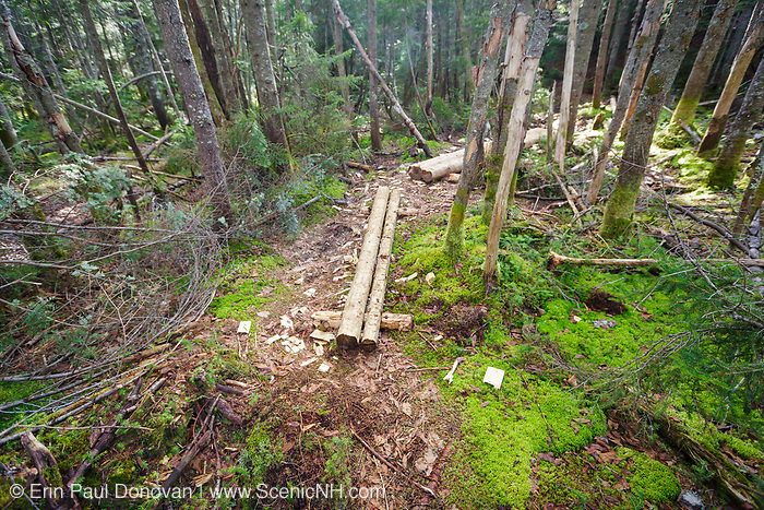 Trail puncheons (bog bridges) along the Lincoln Brook Trail in the Pemigewasset Wilderness of the New Hampshire White Mountains. Puncheons are used in wet areas along trails.