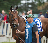 Belmont Turf Sprint - Pure Sensation