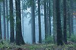 Europa, DEU, Deutschland, Hessen, Rhoen, Poppenhausen (Wasserkuppe), Wald, Nebel, Dunst, Kategorien und Themen, Natur, Umwelt, Landschaft, Jahreszeiten, Stimmungen, Landschaftsfotografie, Landschaften, Landschaftsphoto, Landschaftsphotographie, Wetter, Wetterelemente, Wetterlage, Wetterkunde, Witterung, Witterungsbedingungen, Wettererscheinungen, Meteorologie, Wettervorhersage<br /> <br /> [Fuer die Nutzung gelten die jeweils gueltigen Allgemeinen Liefer-und Geschaeftsbedingungen. Nutzung nur gegen Verwendungsmeldung und Nachweis. Download der AGB unter http://www.image-box.com oder werden auf Anfrage zugesendet. Freigabe ist vorher erforderlich. Jede Nutzung des Fotos ist honorarpflichtig gemaess derzeit gueltiger MFM Liste - Kontakt, Uwe Schmid-Fotografie, Duisburg, Tel. (+49).2065.677997, ..archiv@image-box.com, www.image-box.com]