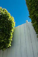 Bushes against white wood fence