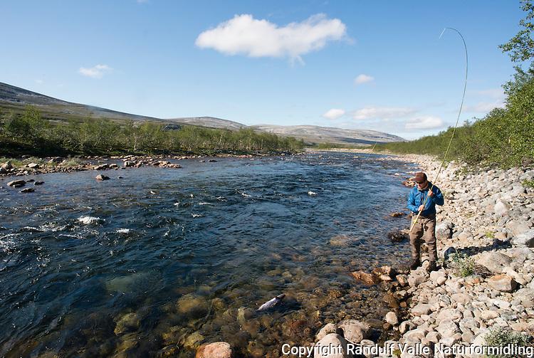 Mann kjører laks på sone 3 i Børselva ---- Man fighting salmon in Børselv, Norway.