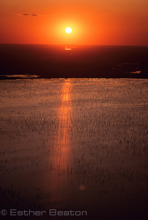 Barren Box Swamp, an irrigation dam with flooded box trees. At sunrise. Riverina area west of  Griffith, New South Wales