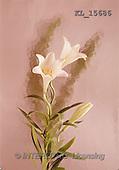 Interlitho, Erica, SYMPATHY, photos, white lilies(KL15686,#T#) Beileid, condolación