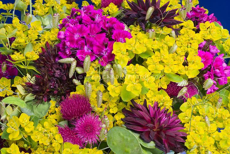 Dahlia, Dianthus, Euphorbia, Circium bouquet of cut flowers mixed in arrangement