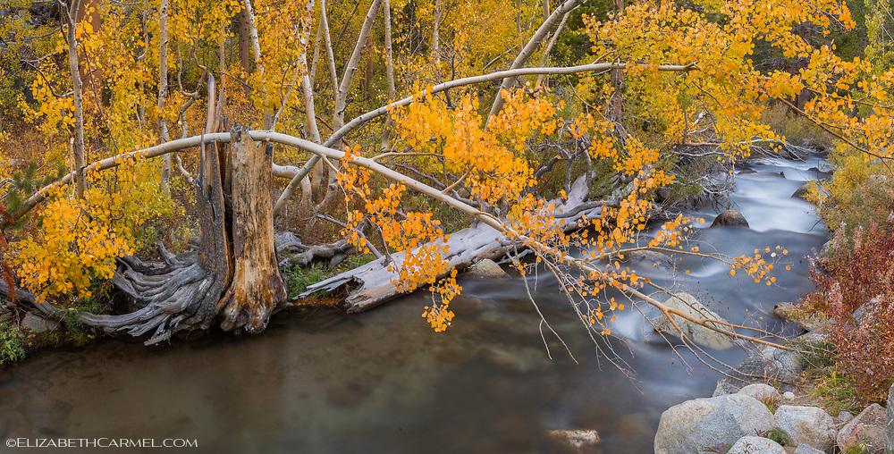 River Colors