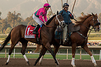 ARCADIA, CA  DECEMBER 26:  #1 City of Light, ridden by Drayden Van Dyke, in the post parade of the Malibu Stakes (Grade l) on December 26, 2017 at Santa Anita Park in Arcadia, CA. (Photo by Casey Phillips/ Eclipse Sportswire/ Getty Images)
