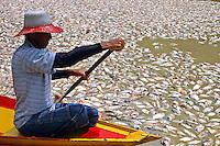 MANAUS-AM; 18/10/2005; O pescador Elson Sena de OLiveira passa em sua canoa em meio a peixes mortos no lago dos Reis.<br /> Careiro, Amazonas, Brasil.<br /> 18/10/2005<br /> Foto AntÙnio Lima/Interfoto