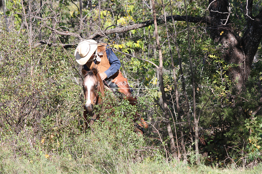 A cowboy riding a horse through the brush