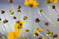 Botanical Sampler