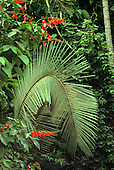 Amazon forest, Brazil. Gracefully curving palm leaf with red flowers nearby.