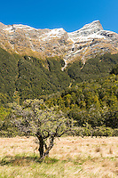 Matagouri and Humboldt Mountains near Chinamans Bluff, Mount Aspiring National Park, Central Otago, New Zealand, NZ