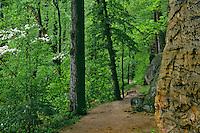 Flowering dogwood<br /> Ledges Trail, Ledges<br /> Cuyahoga Valley National Park <br /> Summit County,  Ohio