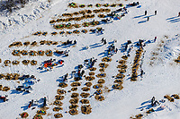 Teams rest on straw at the Galena checkpoint during the 2017 Iditarod on Friday afternoon March 10, 2017.<br /> <br /> Photo by Jeff Schultz/SchultzPhoto.com  (C) 2017  ALL RIGHTS RESERVED