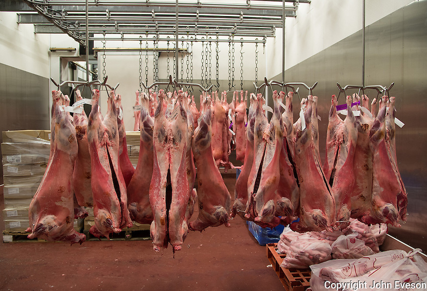 Lamb carcases in an abattoir, Yorkshire.
