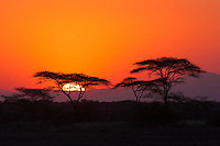 Sunset in the acacia trees at Awash, Ethiopia