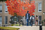 The trees are only getting more colorful.  Photo by Kevin Bain/University Communications Photography