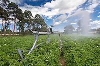 Irrigating potatoes with a raingun - Norfolk, July