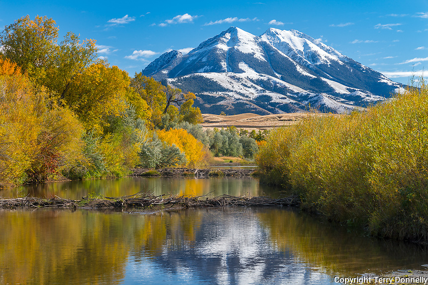 Park County, MT: Calm waters of a beaver ponsd on the Yellowstone River in fall with Emigrant Peak reflecting
