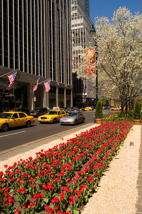 New York City, New York: Tulips on Park Avenue .Photo #: ny283-14916  .Photo copyright Lee Foster, www.fostertravel.com, lee@fostertravel.com, 510-549-2202.
