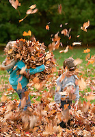 Kids playing and walking in fall leaves