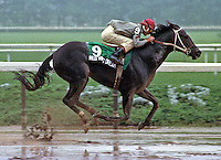 Red Wing Dream,  Jerry Bailey up, at Belmont Park