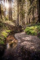Butano State Park San Mateo County