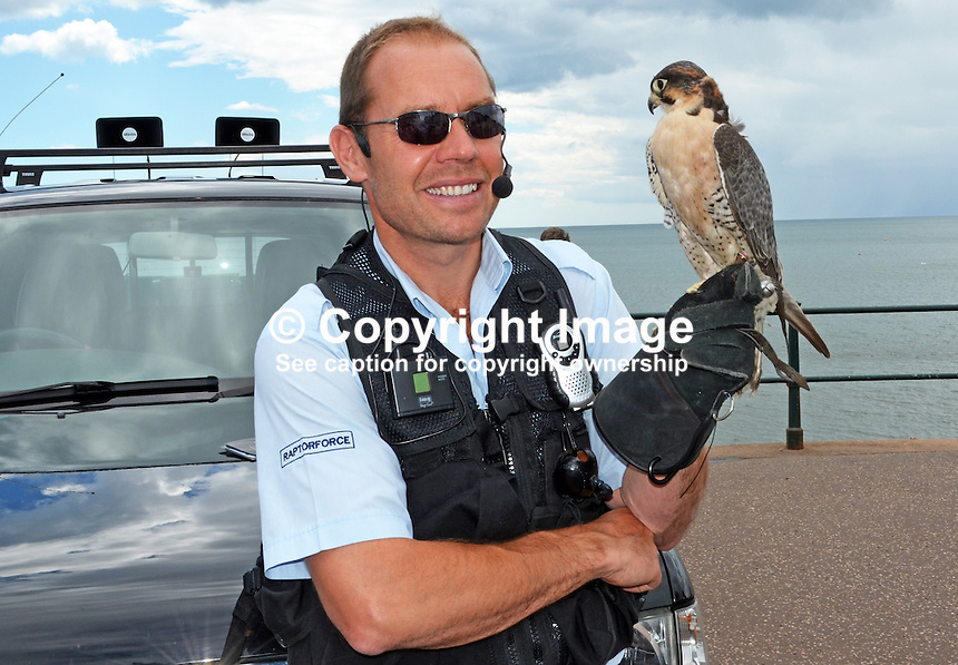 Raptorforce handler with peregrine falcon which he used in a pest control demonstration on the seafront at Sidmouth, Devon, on 8th July 2014. The pest in this case was seagulls. For more information go to www.raptorforce.com. 201407083402<br />