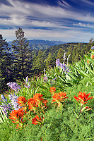 Paintbrush and Camas Lily at Hell's Canyon Overlook. Oregon