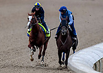 LOUISVILLE, KENTUCKY - APRIL 28: Improbable, trained by Bob Baffert, exercises in preparation for the Kentucky Derby at Churchill Downs in Louisville, Kentucky on April 28, 2019. John Voorhees/Eclipse Sportswire/CSM