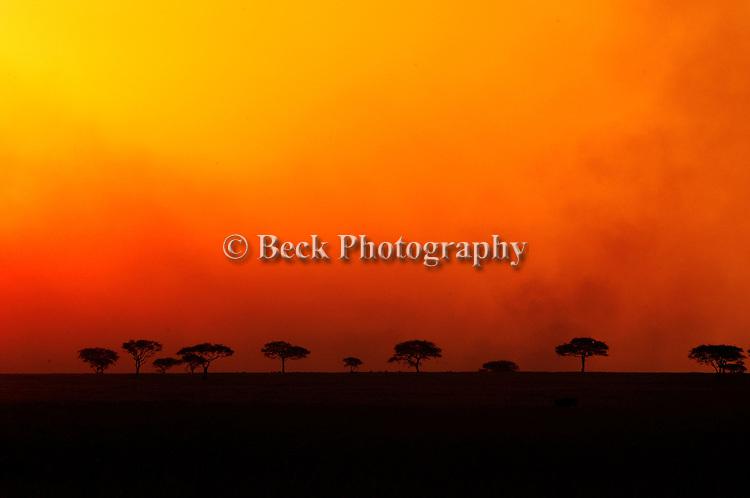 Africa Serengeti National Park sunset