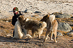 Three huskies play with a woman in Baffin Island, Nunavut, Canada.