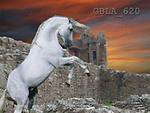 Bob, ANIMALS, collage, horses, photos(GBLA620,#A#) Pferde, caballos