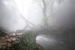 Early morning fog at the Living root bridges in Rawat, Mawlynnong, tourists come form all over india to cross the small river on this small bridges that are handmade from the aerial roots of living banyan fig trees, by the Khasi people, 22 July 2016.<br />