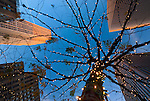 Skyscrapers of Rockefeller Center, view from below, looking up at outdoor tree lit with holiday white lights, twilight on December 6, 2009, Avenue of the Americas, midtown Manhattan. (Note: Extreme wide angle perspective reflected in focus of lower thin branches near border.)