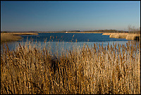 BNPs.co.uk (01202 558833)<br /> Pic: RichardOsbourne/NWT/BNPS<br /> <br /> Hickling Broad in Norfolk where the caterpillars were stolen from.<br /> <br /> Police are investigating after some exceptionally rare caterpillars that turn into Britain's largest butterfly were stolen from a nature reserve. <br /> <br /> Around 20 swallowtail butterfly caterpillars that were feeding on the scarce milk parsley plant were swiped from Hickling Broad in Norfolk.<br /> <br /> Brazen thieves uprooted five of the internationally protected plants in order to acquire the caterpillars and subsequent Swallowtail butterflies, which are prized by collectors. <br /> <br /> Killed and mounted examples of the beautiful creature can be worth &pound;100 while some unlawful hobbyists seek them for breeding because of their rarity.