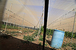 Plastic fleece enclosed space used for agriculture, Fuerteventura, Canary Islands, Spain
