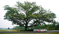 The #31 Corvette of Boris Said, Eric Curran and Sonny Whelen races round the Oak Tree during the Grand-Am Rolex Series test at Virginia International Raceway, Alton, VA , October 2010. (Photo by Brian Cleary/www.bcpix.com)