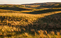 Late afternoon light on Merz Ranch, Sand Hill Prairie, nebraska