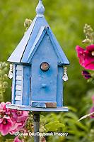 01324-01409 House Wren (Troglodytes aedon) at blue nest box near Hollyhocks (Alcea rosea) Marion Co. ,  IL