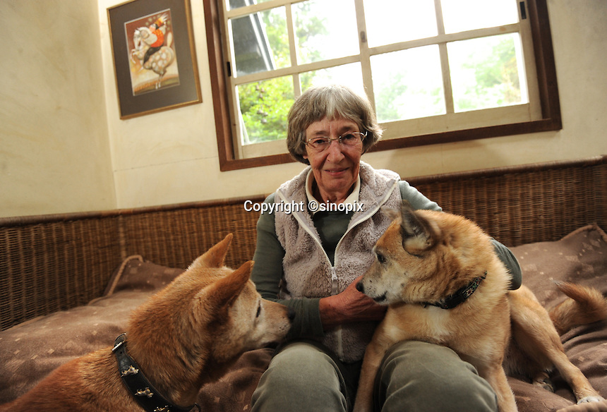 Elizabeth Oliver with rescued dogs at the ARK animal refuge outside Osaka, Japan, 26th May 2011.  ARK has rescued more than 200 dogs, 16 cats and a guinea pig from with-in the nuclear exclusion zone surrounding the Fukushima Daiichi nuclear power plant in Japan...© Richard Jones/ sinopix.PHOTO BY SINOPIX