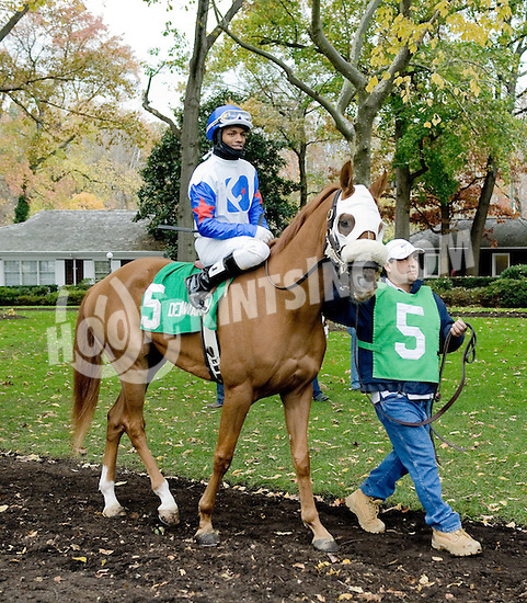 Nouveau Rich before The Delaware Park Arabian Classic Handicap at Delaware Park on 11/3/12...