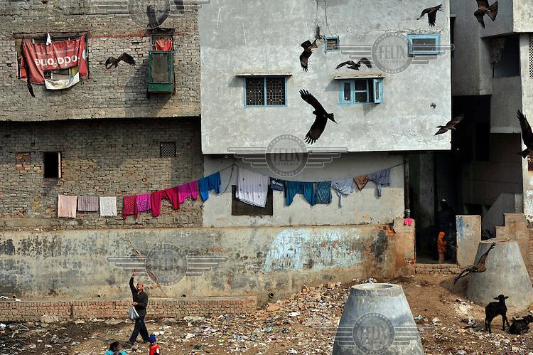 A man feeds a circling flock of hawks in a slum in the area od Nizamuddin East.