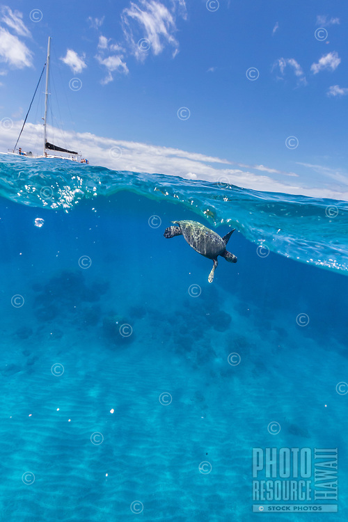 An over-and-under image of a green sea turtle or honu off of Olowalu, Maui.