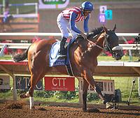 DEL MAR, CA August 05: #3 Bellafina breaks her maiden with Flavien Prat in the Grade II Sorrento Stakes at Del Mar on August 05, 2018 in Del Mar, California (Photo by Chris Crestik/Eclipse Sportswire)