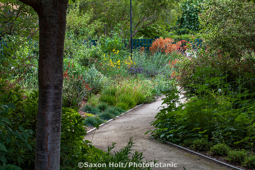 Path into drought tolerant California-Style garden room, Gamble Garden, Palo Alto, California