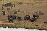 Elephant (Loxodonta africana) et   cobe à croissant, Waterbuck (Kobus ellipsiprymnus)