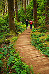People walking on a wooden boardwalk trail in the Fern Canyon area in the Prairie Creek Redwoods State Park in California
