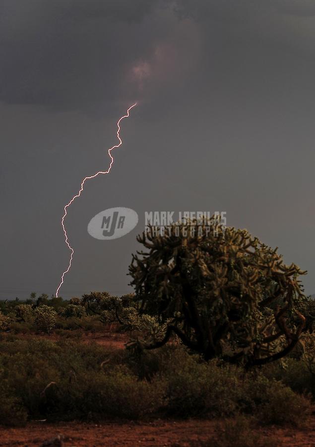 Desert cactus clouds sky thunderstorm lightning bolt storm chaser chasing weather monsoon storm Arizona thunderstorm nature saguaro cholla