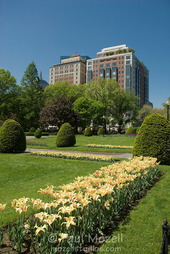 The Boston Public Garden, adjacent to The Boston Common, is one of the city's most popular destinations year round. Throughout the spring and summer it regales in bright flower gardens.